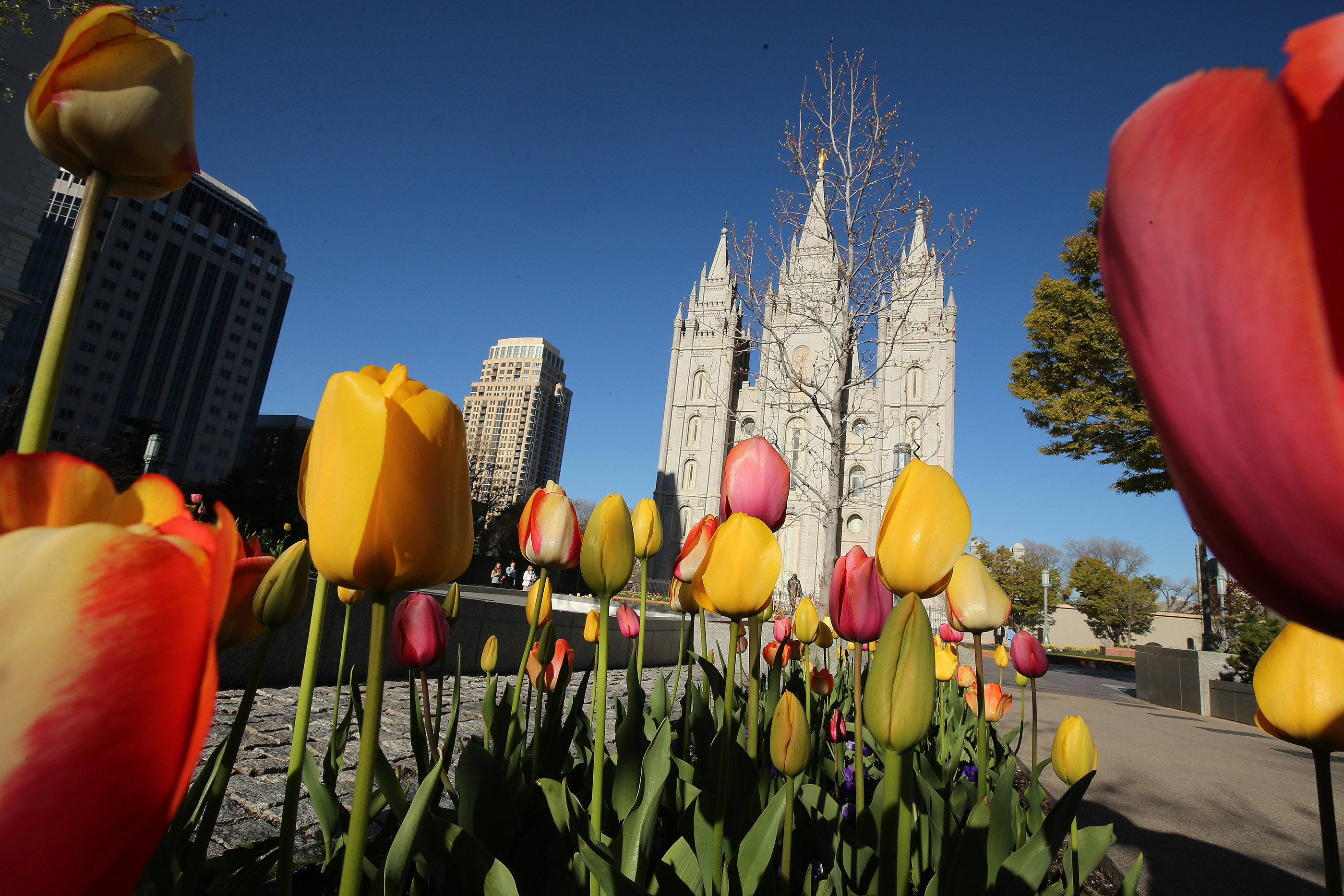 Flowers adorn the grounds of the Salt Lake Temple in Salt Lake City on Friday, April 19, 2019. Leadership of The Church of Jesus Christ of Latter-day Saints announced renovation plans for the Salt Lake Temple and changes to the temple grounds and Temple Square.