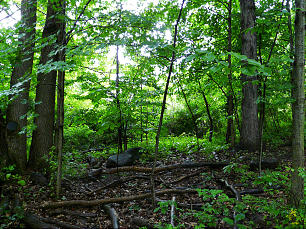 The Sacred Grove during a typical afternoon rain shower.