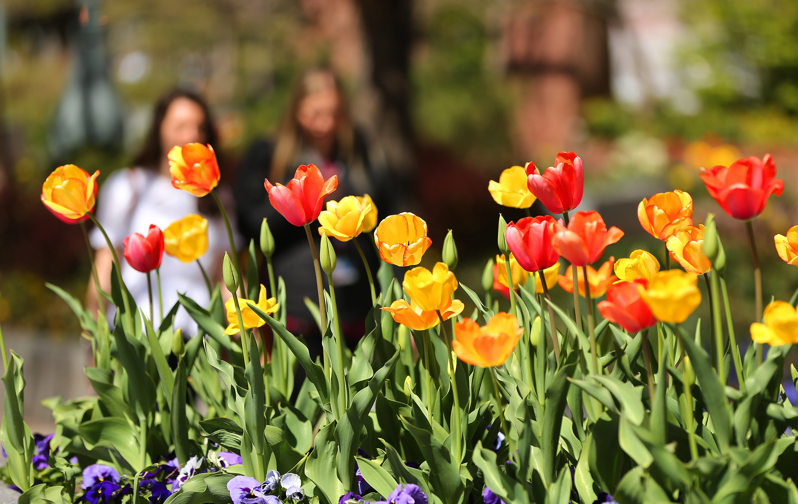 Visitors walk past flowers on the grounds of the Salt Lake Temple in Salt Lake City on Friday, April 19, 2019. Leadership of The Church of Jesus Christ of Latter-day Saints announced renovation plans for the Salt Lake Temple and changes to the temple grounds and Temple Square.
