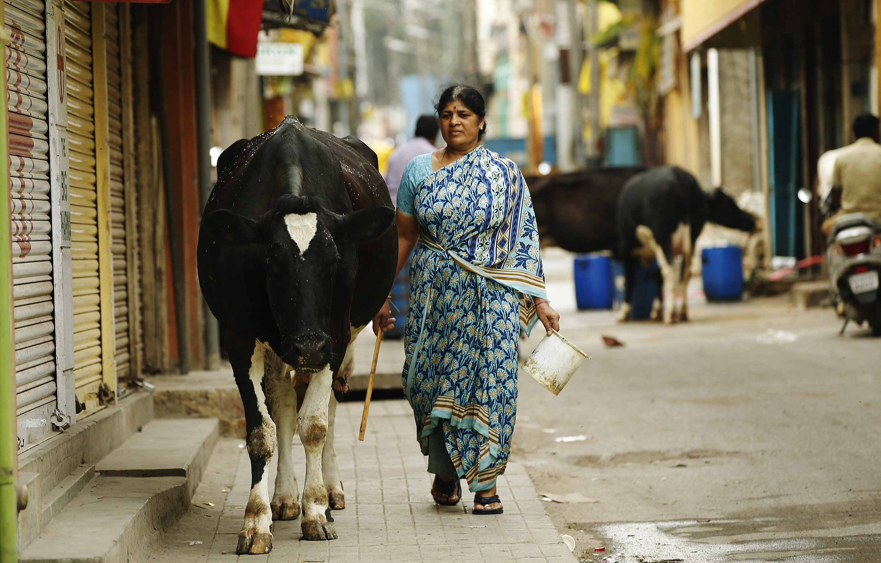 A woman herds a cow on a street in Bengaluru, India, on Thursday, April 19, 2018.