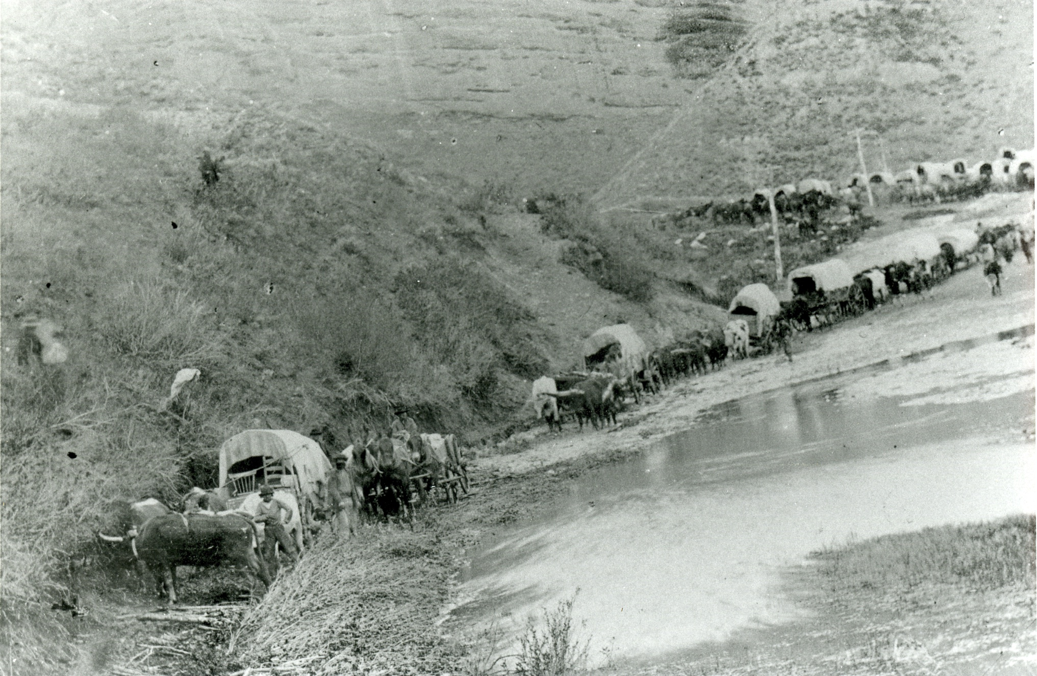 Pioneers trek across the wilderness with covered wagons and handcarts.