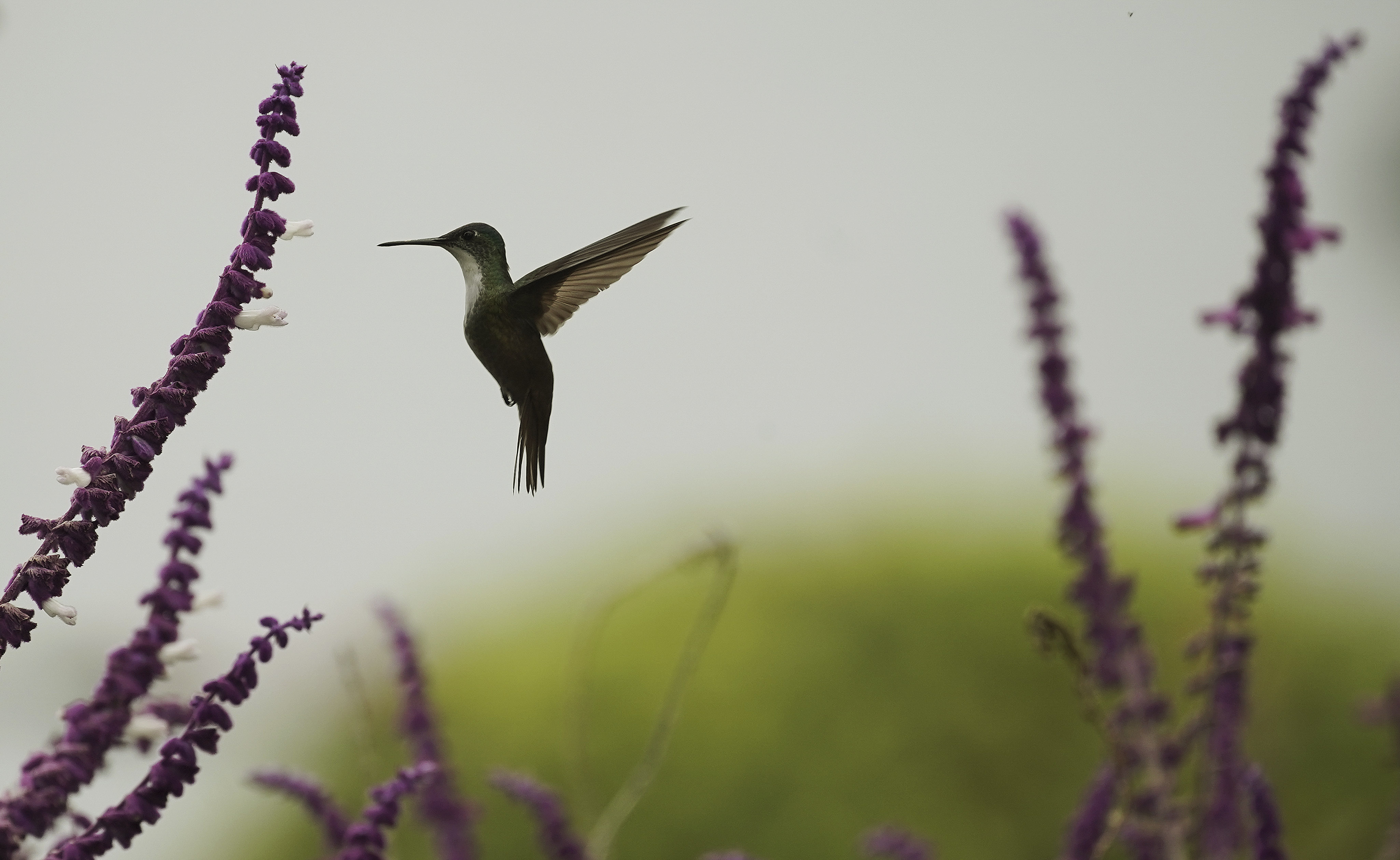 A hummingbird flies near Lake Atitlan, Guatemala, on Monday, Aug. 19, 2019. President Russell M. Nelson of The Church of Jesus Christ of Latter-day Saints spoke in a devotional on Saturday, Aug. 24, in Guatemala City.
