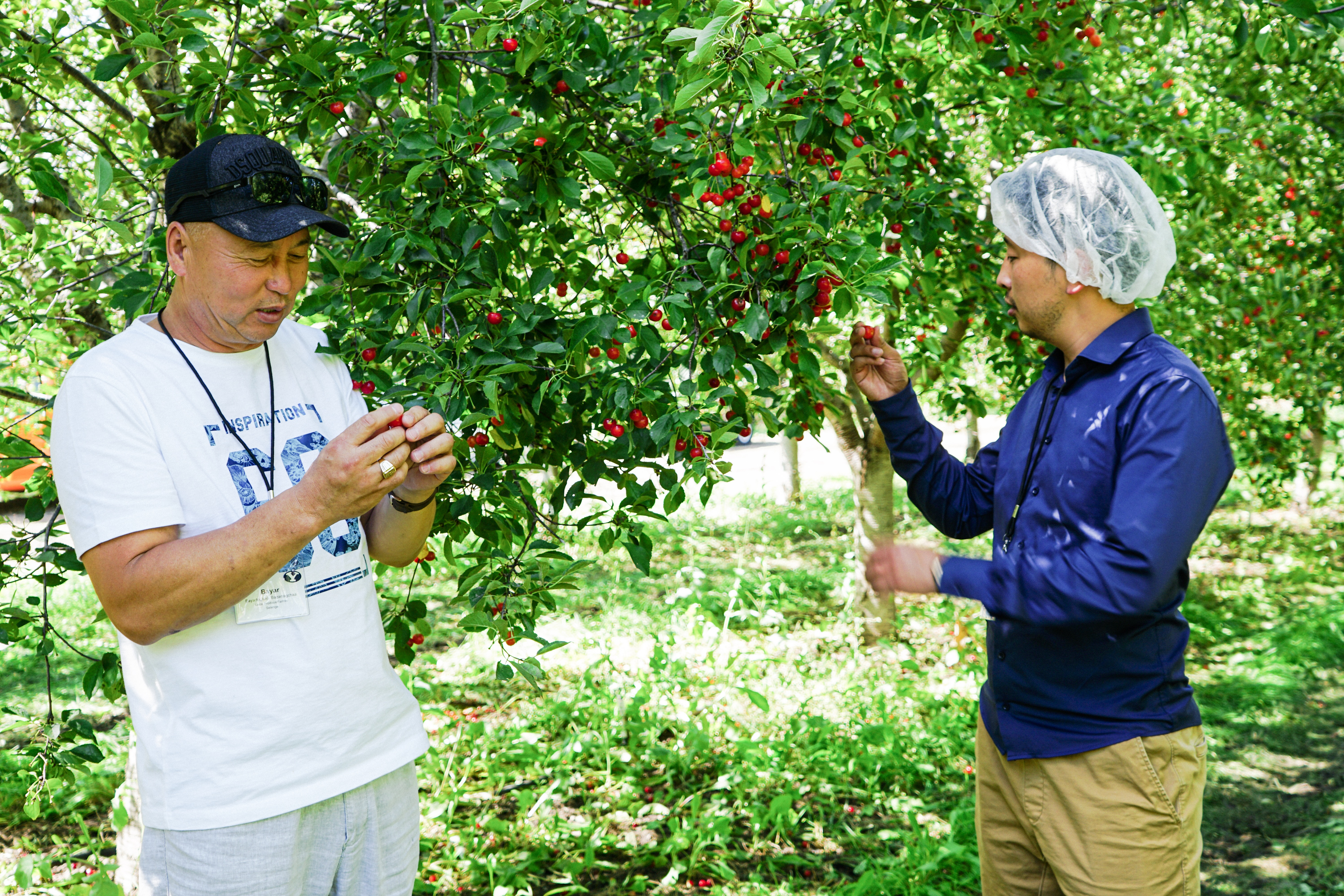 Members of the Mongolian delegation visiting BYU as part of an ongoing partnership to improve food preservation systems in Mongolia visit a fruit farm in Utah during their visit in August 2019.