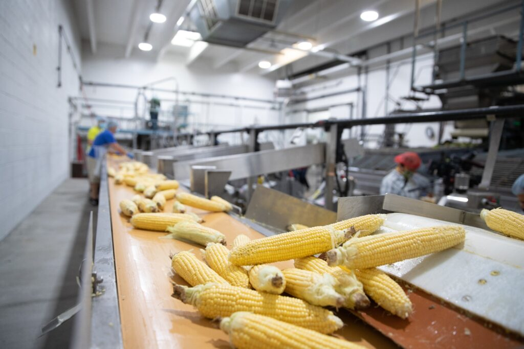 Corn is processed at the Murray Utah Cannery, Friday, August 14, 2020.