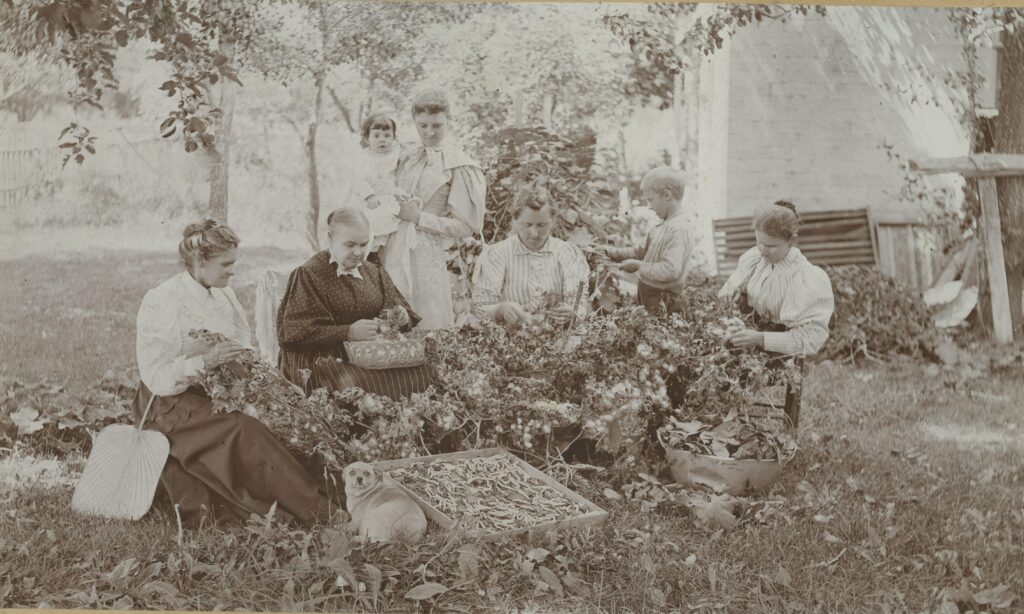 Women working with silk worms, circa 1895