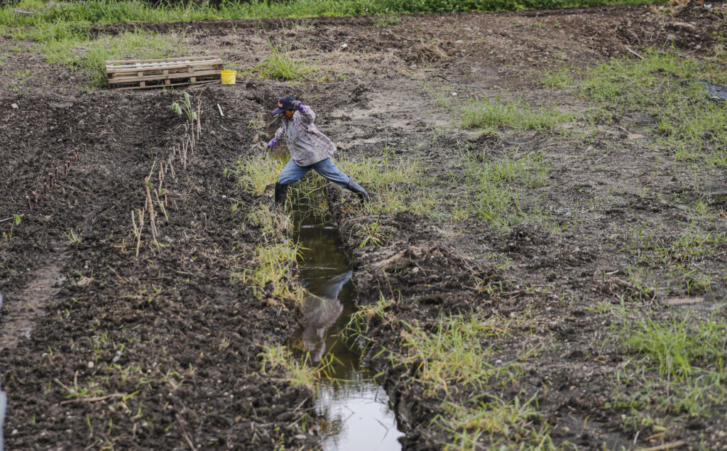 Farmer Juanita James leaps over an irrigation canal on her farmland on Saturday, March 20, 2021, on the Laie Hawaii Crops Farm in Hauula, Hawaii. Laie Hawaii Crops Farm is comprised of 178 acres that are divided into farmable plots, ranging in sizes up to 1 1/4 acres. Throughout the COVID-19 pandemic the farmland has been a vital part of feeding the church community and their families who take care of the land.