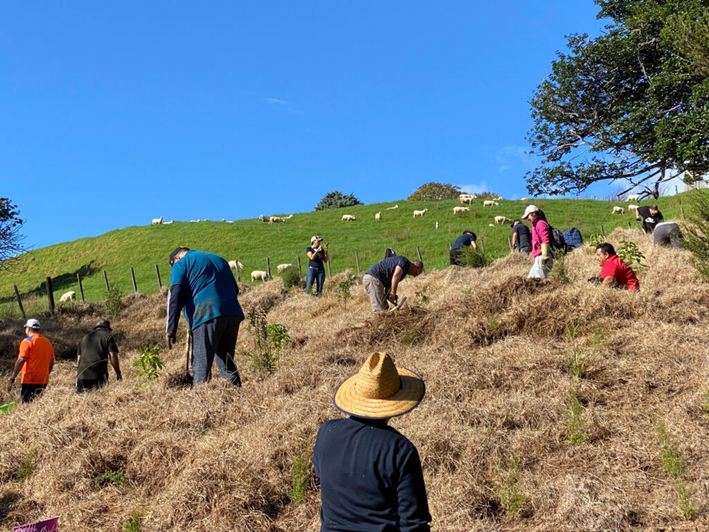 Volunteers from the Pacific Area Office plant native trees and shrubs on a steep hillside at the scenic Wenderholm Regional Park near Auckland. The new vegetation will help retain moisture and attract native birds.