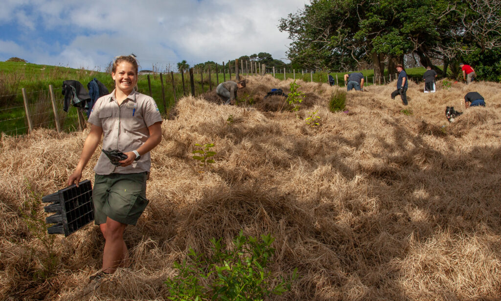 Volunteers plant native trees and shrubs on a steep hillside at the Wenderholm Regional Park near Auckland. The new vegetation will help retain moisture and attract native birds.