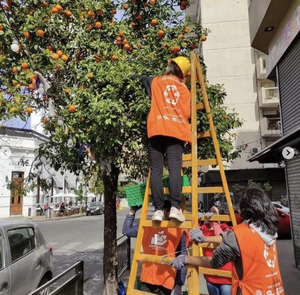 In August of 2021, JustServe volunteers in Buenos Aires, Argentina, participated in a project sponsored by a local food to harvest oranges growing on public streets to make jam for people in need in their community.