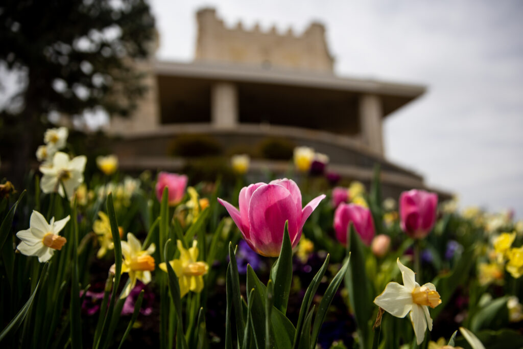 Flowers bloom at the Manti Utah Temple of The Church of Jesus Christ of Latter-day Saints in Manti on Saturday, May 1, 2021.